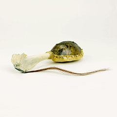Abenaki rattle made from a tortoise shell and bone.